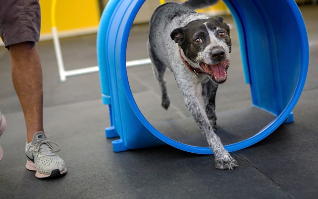 We're Hiring: Dog Training Instructor (PT)
