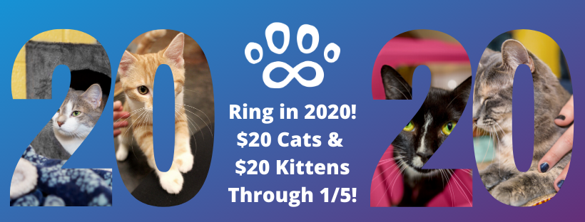 Ring in 2020 with a new cat!
