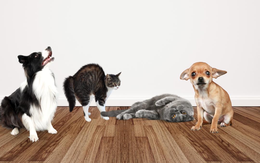 Dog and Cat Body Language