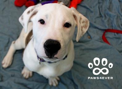 Dog Card Example
