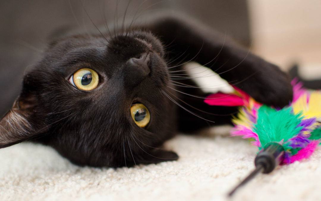 Cat Toy Guide