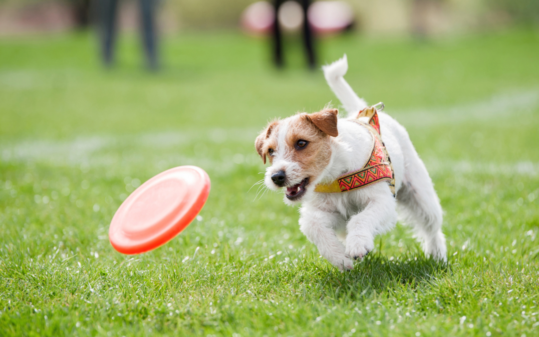 Dog Toy Guide